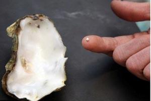 男子吃生蚝意外发现珍珠 概率仅百万分之一