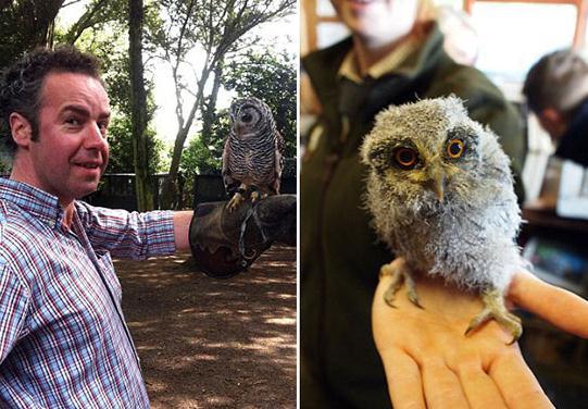 大灰猫头鹰,还有在刚刚亚马逊发现的一种猫头鹰,以及一种会发出像气球