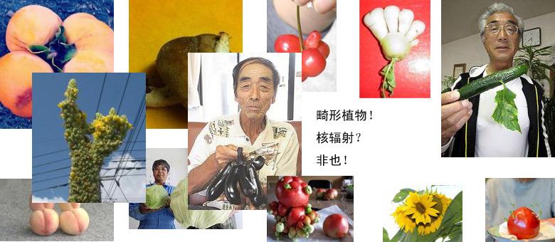 媒体转载日本畸形植物引恐慌 网友扒出真相