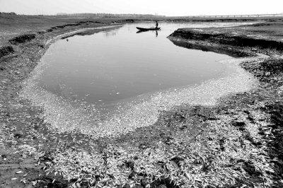 企业排污致鱼类死亡绵延30公里
