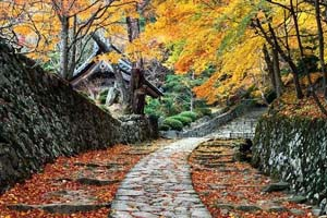 最佳赏秋胜地 聆听秋之声