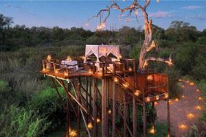 栖息枝头 感受世界五大树屋旅店
