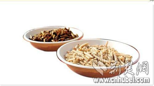 武汉大学生举办昆虫宴 教师带头吃蛆(图)
