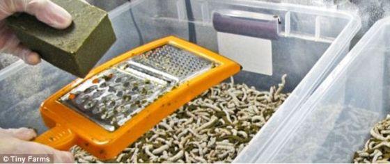 美推出昆虫养殖箱:欲全球发展可靠昆虫农场