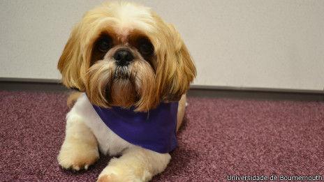 发明家将制作狗叫翻译器 主人可读懂宠物想法