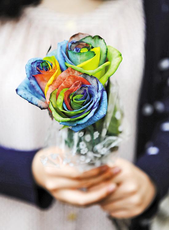 广州:玫瑰货少巨贵 60元一扎创新高