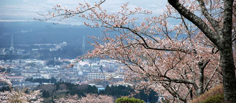 盘点日本自由行的赏樱最佳地点