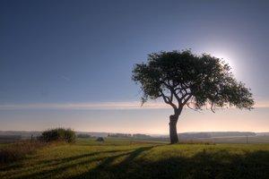 看看身边的树藏了多少故事