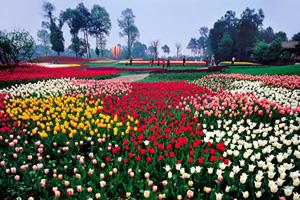 阳春三月 看花花世界