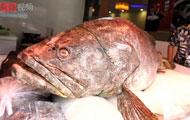 饭醉团伙:进击的巨鱼