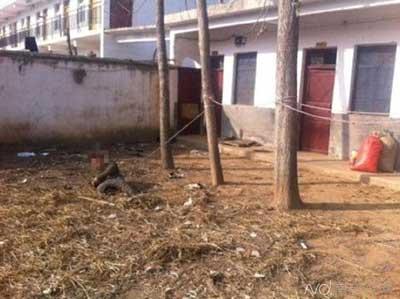河南一救助中心将2孩子拴树上